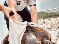 Salerno: la Guardia Costiera salva un esemplare di tartaruga caretta caretta