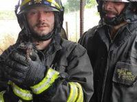 Incendio in un fienile a Ruoti. I Vigili del Fuoco salvano due gatti dalle fiamme