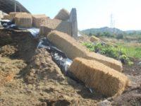 Smaltisce illecitamente reflui bufalini nei terreni. Denunciato imprenditore a Serre