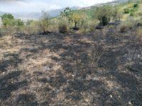 Fiamme in un uliveto ad Atena Lucana. Intervengono la Squadra Antincendio Boschivo e i Vigili del Fuoco