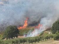 Vasto incendio tra Buccino e San Gregorio Magno. In fumo diversi ettari di vegetazione