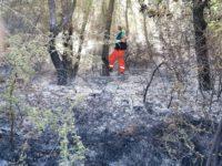 Polla ancora preda degli incendi boschivi. A fuoco terreno in località Sarconi Pozzicello