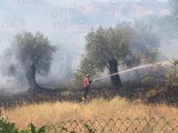 Incendio a Sala Consilina. Le fiamme mandano in fumo un uliveto secolare