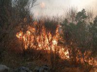 Incendi boschivi senza tregua nel Vallo di Diano. Vegetazione in fiamme tra Sala Consilina e Padula