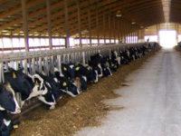 Agricoltura. Fondo filiere zootecniche, domande fino al 22 ottobre per l'accesso ai 90 milioni di euro