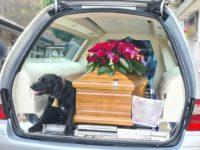 Buonabitacolo: cane accompagna e veglia il feretro del suo padrone nell'ultimo viaggio verso il cimitero
