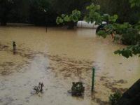 """Il maltempo mette in ginocchio coltivazioni e aziende nel Golfo di Policastro. Coldiretti:""""Misure urgenti"""""""