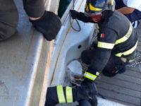 Gattino rimane incastrato sotto gli scogli del porto di Camerota. Salvato da Vigili del Fuoco e Capitaneria