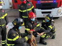 Cane in difficoltà, con la coda e una zampa tagliate, salvato dai Vigili del Fuoco a Potenza