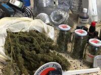 Coltiva marijuana in casa a Battipaglia. Denunciato 36enne del posto