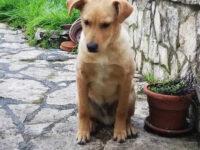 San Pietro al Tanagro: cane abbandonato cerca casa e affetto
