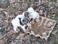 Vietri di Potenza: quattro cuccioli abbandonati tratti in salvo da Guardie Zoofile e Polizia Locale