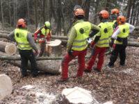 Formazione per istruttori forestali. La Basilicata individuata come responsabile per le Regioni del Sud
