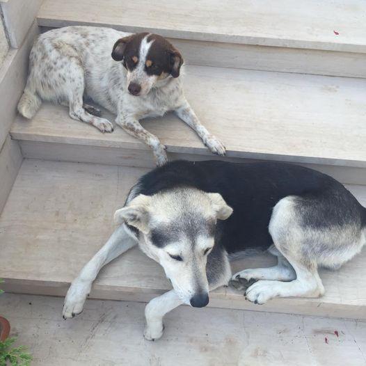 """Scomparsi due cani da Sant'Arsenio. L'appello dei proprietari:""""Aiutateci a ritrovarli"""""""