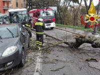 Disagi del maltempo. A Potenza albero cade su un'auto in transito, a Pignola straripa un torrente