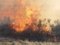 Per oltre 24 ore brucia località Montagna a Tito. Distrutti ettari di Macchia Mediterranea e uliveti