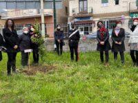 Piantata davanti all'ospedale di Polla una mimosa per omaggiare le conquiste delle donne