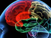 """Epilessia causata da una malformazione cerebrale. Uno studio del """"San Carlo"""" di Potenza su """"Clinical Genetics"""""""