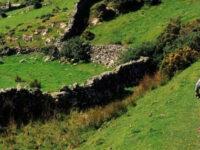 Il Codacons Cilento lancia una campagna nell'Area Parco contro i reati ambientali