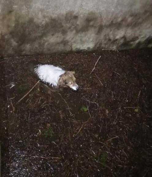 Vietri di Potenza: Guardie Zoofile Enpa salvano cagnolina finita in una vasca di raccolta acque