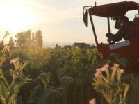 """""""Buone pratiche in agricoltura nel Vallo di Diano"""". Al via l'iniziativa del GAL, domande fino al 30 maggio"""