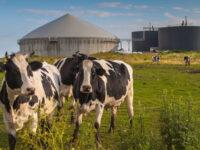 Impianti biogas negli allevamenti per trasformare i nitrati in risorsa. La proposta della Cia Campania