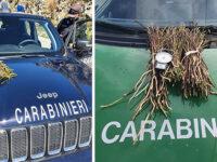 Controlli per la prevenzione degli incendi boschivi. Sequestrati 87 kg di asparagi selvatici in Campania