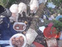 Vietri di Potenza: cagnolini abbandonati in un terreno tra i rifiuti. Tratti in salvo dalle Guardie Zoofile dell'Enpa