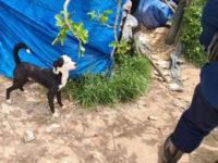 Ottanta cani custoditi in pessime condizioni tra Eboli e Campagna. Denunciato un uomo