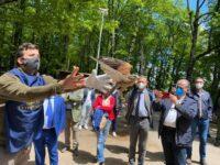 """""""Giornata in Foresta"""". Alla Cerreta liberati due esemplari di rapaci, presto un Centro di Recupero per Animali Selvatici"""