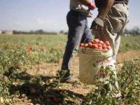 """""""Vietare il lavoro nei campi nelle ore più calde"""". La richiesta della Commissione Pari Opportunità della Basilicata"""