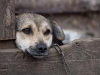 Detenzioni di animali alla catena, in Campania è divieto. Sanzioni fino a 2mila euro