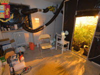 Coltiva marijuana in un appartamento nei pressi della Questura di Potenza. Arrestato 25enne del posto