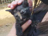 Sala Consilina: gattino finisce in un'intercapedine dove rischia di morire. Salvato dai Vigili del Fuoco