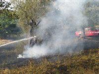 Uliveto in fiamme ad Auletta. I Vigili del Fuoco evitano il peggio
