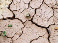 """Allarme siccità in Basilicata. Fratelli d'Italia:""""Il mondo agricolo è in grave difficoltà"""""""