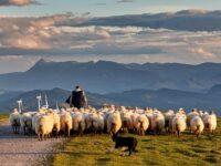 La Regione Basilicata approva il disegno di legge per la tutela della pastorizia e della transumanza
