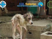 Cani tenuti in condizioni da lager nell'Ebolitano. Denunciato un imprenditore agricolo, sequestrata l'azienda