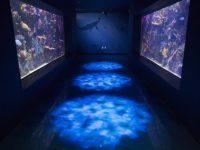 Il 22 luglio a Santa Maria di Castellabate inaugurazione dell'Acquario Virtuale del Parco Nazionale