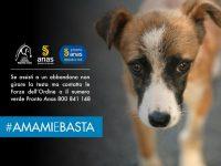 Cani e gatti, incidenti stradali provocati dall'abbandono. Al via la campagna #AMAMIeBASTA