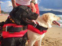 Rischia di annegare nelle acque di Palinuro. 15enne salvata dai cani bagnino Igor e Luna