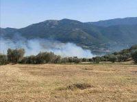 Incendio di origine dolosa a Buccino. In fiamme diverse piante di ulivi
