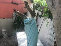 Pecora uccisa e legata a un albero nel centro di Battipaglia. Cittadini indignati