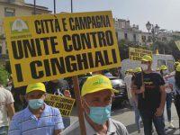 Emergenza cinghiali. A Salerno un presidio di protesta organizzato da Coldiretti con cittadini e amministratori