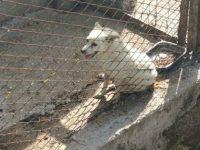Sassano: cane chiuso in un recinto fatiscente. Salvato e dato in adozione dalla Guardia Nazionale Ambientale