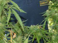 Coltiva marijuana nell'orto di casa. Denunciato 52enne a Castellabate