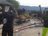 Deposito agricolo in fiamme a Silla di Sassano. Perdono la vita anche capi di bestiame