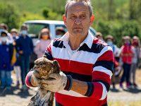 Poiana folgorata ritrovata a Bella ritorna in volo dopo le cure del Centro Recupero Animali Selvatici