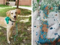 Indignazione a Baragiano per il cane Willy, morto dopo aver inghiottito polpette avvelenate