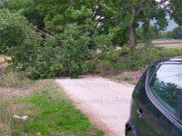 Paura a Sala Consilina. Grosso albero cade sulla strada